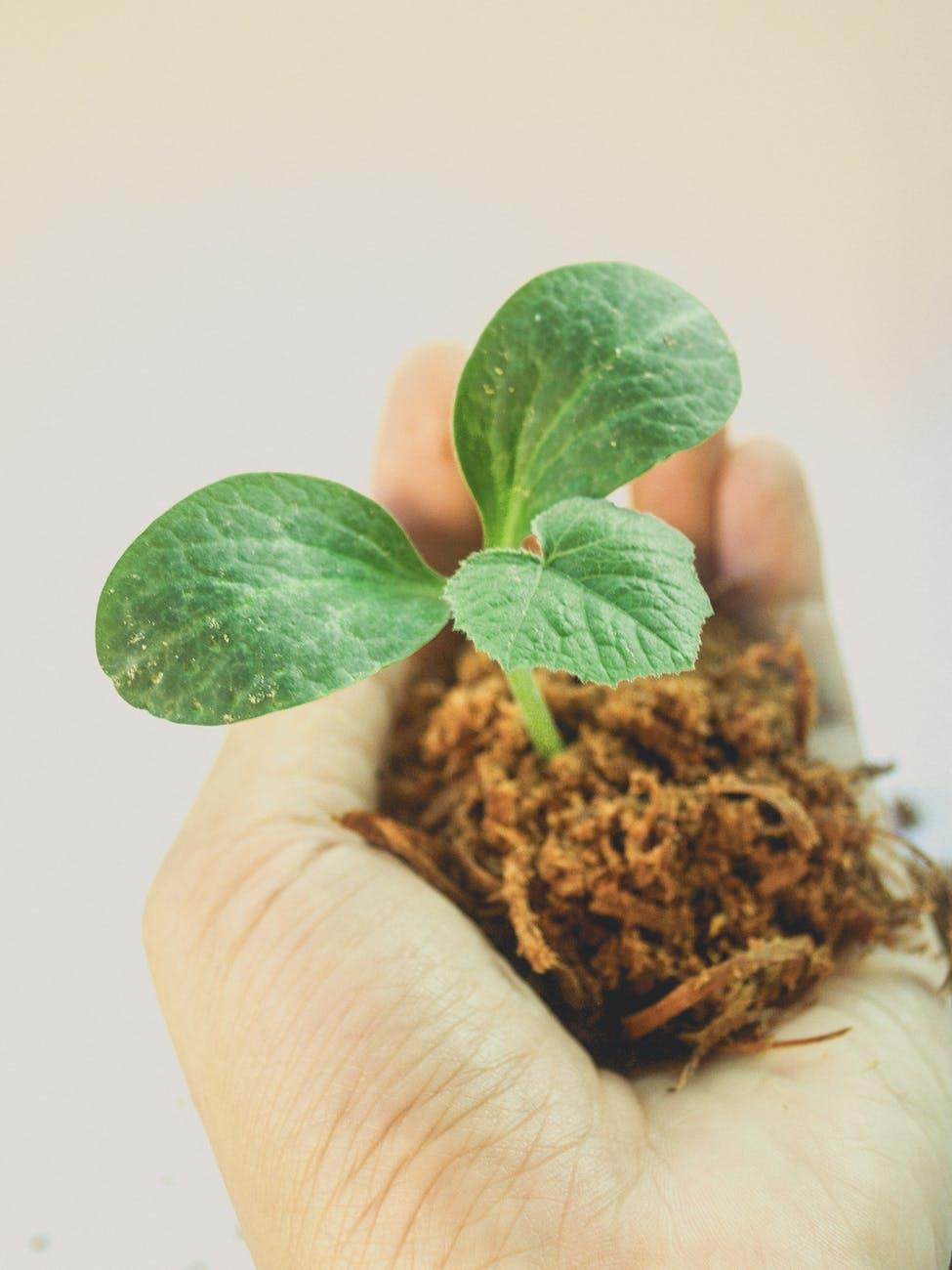 Plant a sapling. Save the environment
